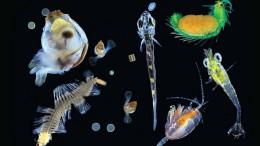 планктон
