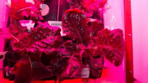 космический салат